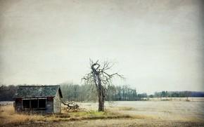 Картинка поле, дом, дерево, Canada, Ontario, Glencoe