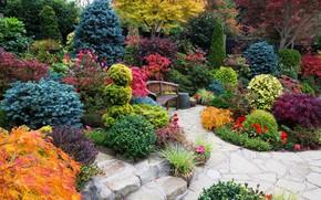 Картинка деревья, цветы, скамейка, дизайн, Англия, сад, кусты, Walsall Garden