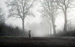 Картинка дорога, туман, собака