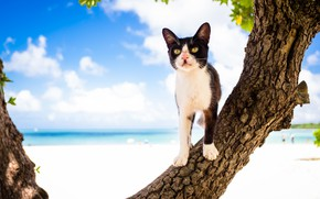 Картинка небо, кот, дерево