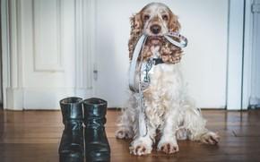Картинка собака, дом, я готов, друг