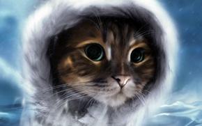 Картинка холод, кот, усы, взгяд, красавец