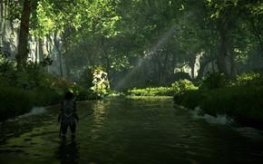Картинка лес, деревья, река, Shadow of the Colossus, В тени колосса