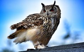 Картинка сова, птица, филин