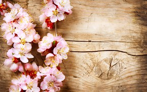 Картинка дерево, ветка, древесина, цветки