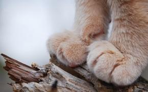 Картинка photo, wood, cat, macro, animal, trunk, fur, closeup, depth of field, Paws, feline