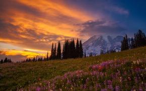 Картинка лес, свет, цветы, горы, гора