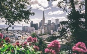 Картинка цветы, город, серый, розовый, мегаполис