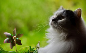 Картинка белый, кот, профиль