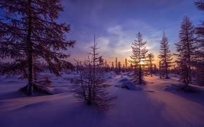 Картинка зима, лес, снег, деревья, закат, вечер, сугробы