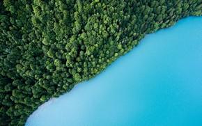 Картинка зелень, лес, вода, деревья, озеро, вид сверху, Beautiful Lake