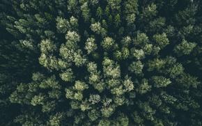 Обои лес, деревья, вид сверху, макушки
