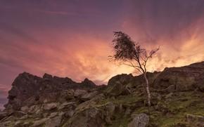 Картинка камни, дерево, скалы, Англия, зарево, Лестершир