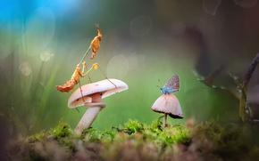 Обои грибы, макромир, роса, бабочка, боке, мох, трава, богомол, свет, жучок
