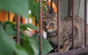 Картинка кот, взгляд, забор, котэ