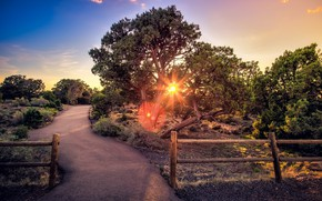 Обои забор, дорога, дерево
