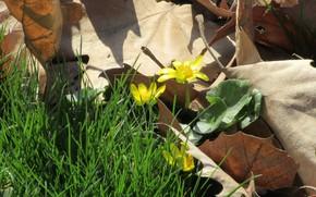 Картинка листья, макро, цветы, апрель, весна 2018, meduzanol ©