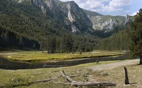 Картинка горы, река, животное, растительность, MP4FILM mini challenge
