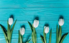 Картинка цветы, тюльпаны, white, белые, fresh, wood, blue, flowers, beautiful, tulips, spring, tender