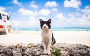 Картинка море, лето, кот, взгляд