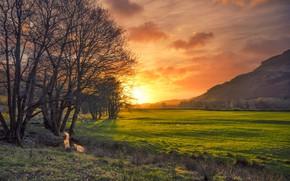 Обои поле, деревья, закат, ручей, Англия, зарево, Камбрия