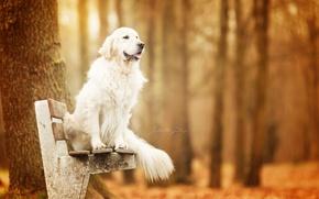 Обои осень, скамья, собака