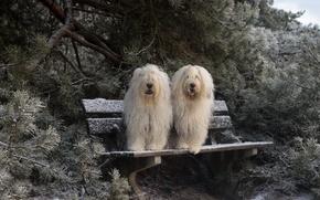 Обои зима, собаки, скамья