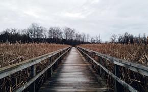 Картинка мост, природа, камыш