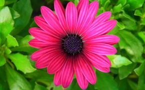 Картинка цветок, листья, лепестки, сад