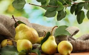 Картинка урожай, фрукты, груши