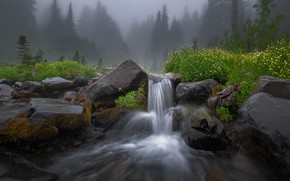 Картинка лес, лето, цветы, природа, туман, река, камни, скалы, поток, дымка
