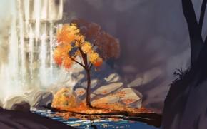 Картинка осень, водопад, ущелье, речка, листопад, одинокое дерево, камни на берегу