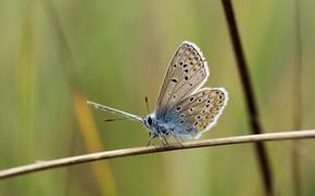 Картинка butterfly, macro, graas, Ryszard Kosmala