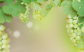 Картинка виноград, гроздь, Grape