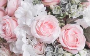Обои цветы, лепестки, розовые, бутоны, розы, белые