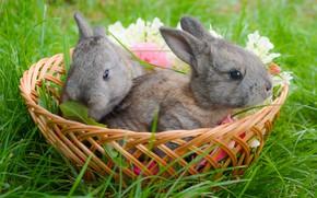 Картинка корзина, кролики, травка, малыши