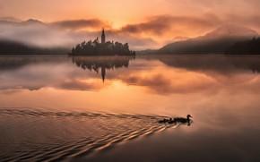 Картинка горы, птицы, туман, озеро, отражение, рассвет, остров, утки, утро, Словения, Lake Bled, Slovenia, Бледское озеро, …