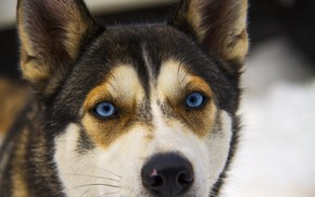 Картинка глаза, друг, собака