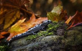 Картинка Макро, Природа, Осень, Листья, Ящерица