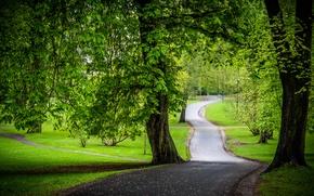 Картинка дорога, зелень, деревья, парк, каштаны