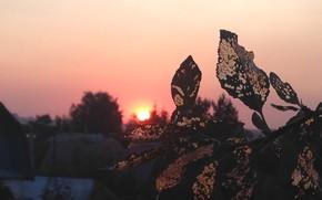 Картинка закат, Природа, вечер, Вишня