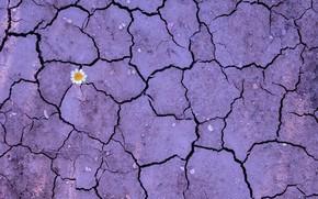 Обои природа, цветок, земля