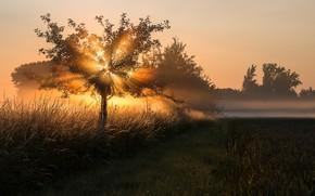 Картинка свет, туман, дерево, утро