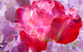 Обои листья, линии, лепестки, краски, рендеринг, цветы