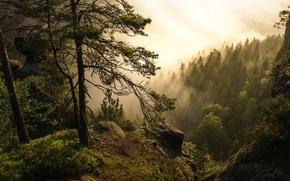 Обои лес, деревья, туман, Германия, Germany, Саксонская Швейцария, Saxon Switzerland, Эльбские Песчаниковые горы, Elbe Sandstone Mountains