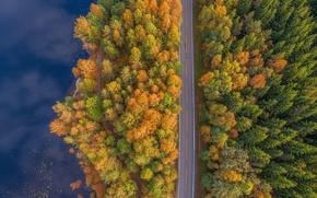 Обои лес, вид сверху, вода, деревья, дорога