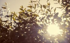 Обои солнце, макро, свет, блики, листва
