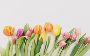 Картинка цветы, colorful, тюльпаны, fresh, wood, flowers, beautiful, tulips, spring