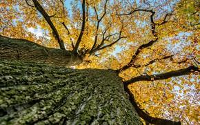 Картинка листья, ветки, дерево, кора