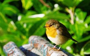 Картинка Природа, Птичка, Bird